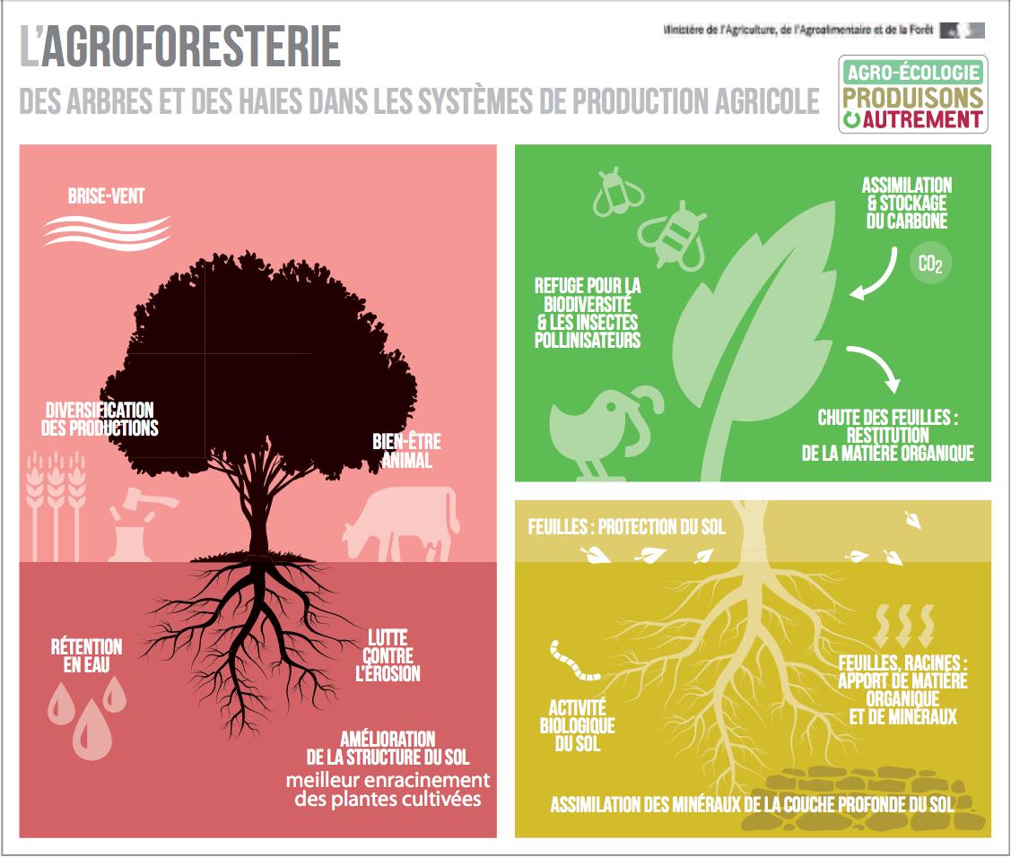 L'Agroforesterie sur les parcelles agricoles